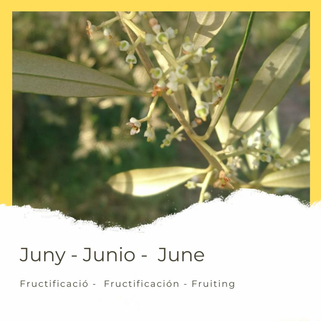 calendari_juny